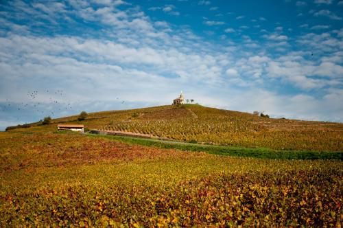 Week-end Marché aux vins de Fleurie et Portes ouvertes du domaine !!