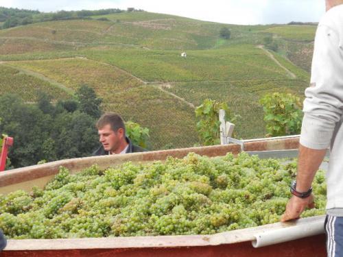 Première Cuvée de vin Blanc  Domaine